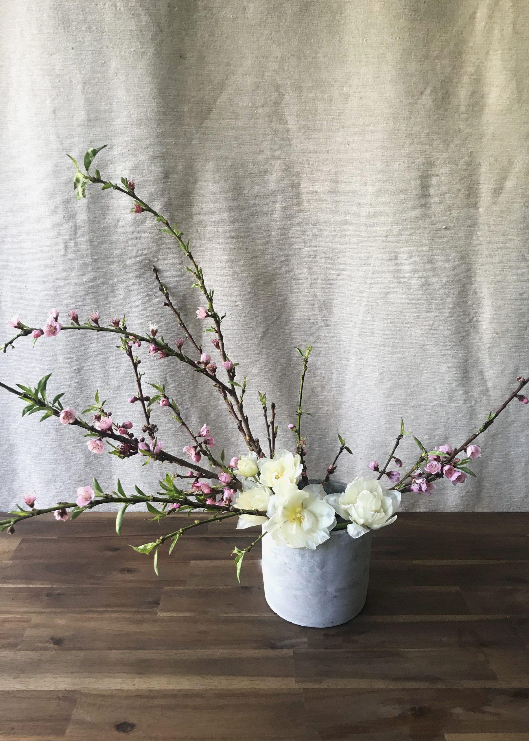 7 Tips to help tulips last longer