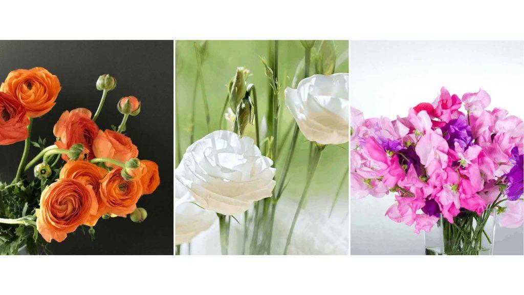 Flowers in season spring