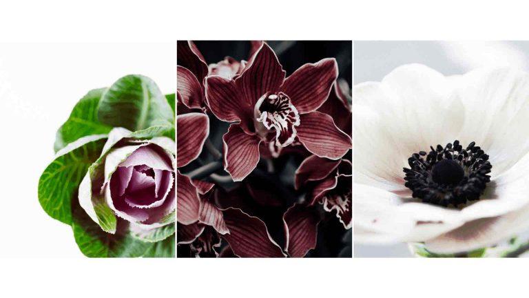 Flowers in season winter